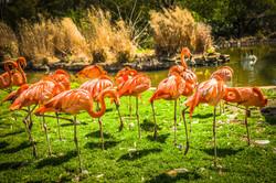 Flamingo's in Florida