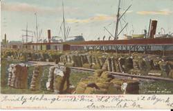 Shipping Cotton, Savannah, GA