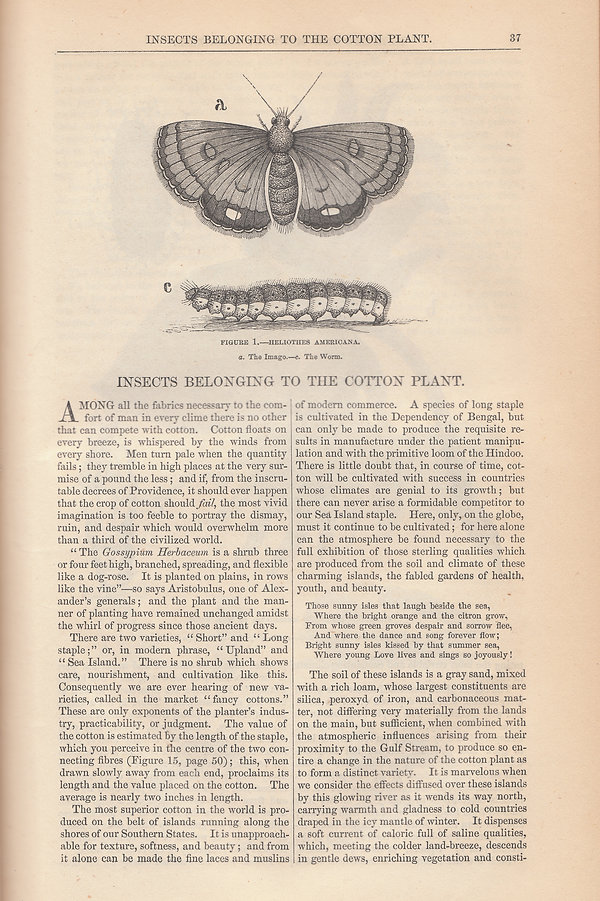 Insects belonging to the cotton plant by Charlotte Taylor