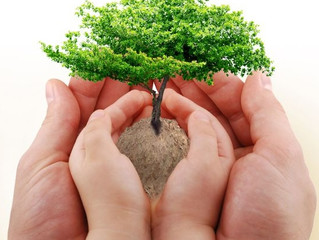Failure to Thrive: The importance of an outside perspective