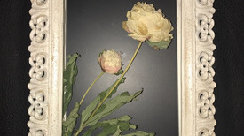Shadow Box Peonies