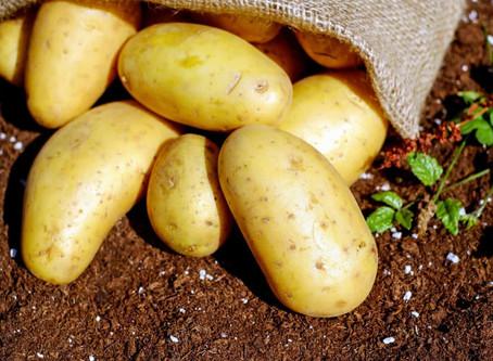 Γνωρίζετε την ιστορία της πατάτας στην Ελλάδα?