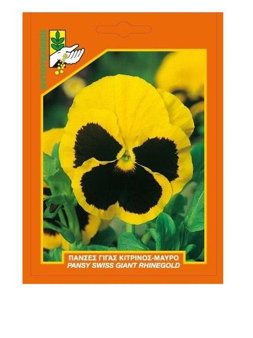 Πανσές γίγας κίτρινο-μαύρο μάτι