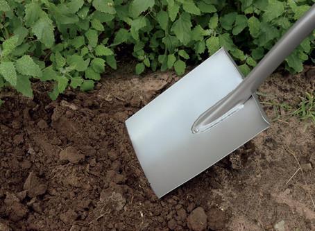 Μεταφύτευση φυτού από το έδαφος σε γλάστρα!