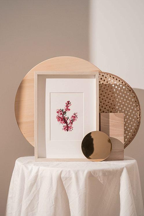 Art Print   Cherry Blossom Watercolour Painting