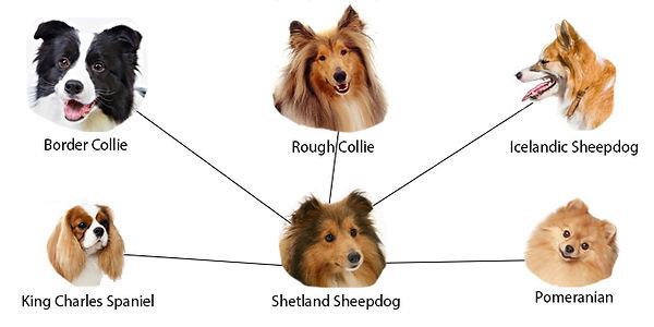 Relatives of the shelties.jpg