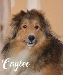 Caylee3.jpg