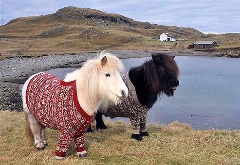 shetland ponies.jpg