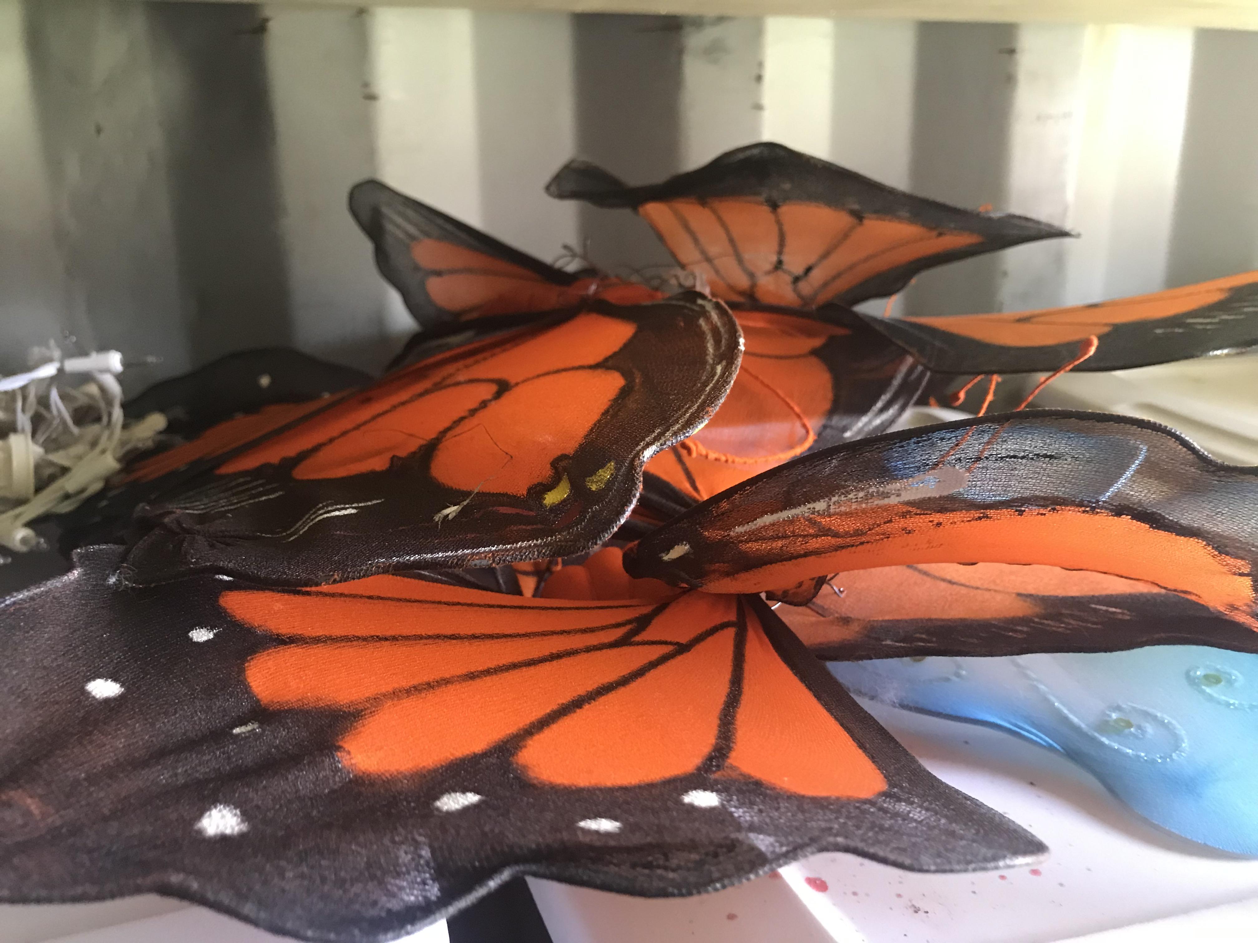Butterflies - Giant