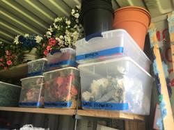 Plants, pots, flowers