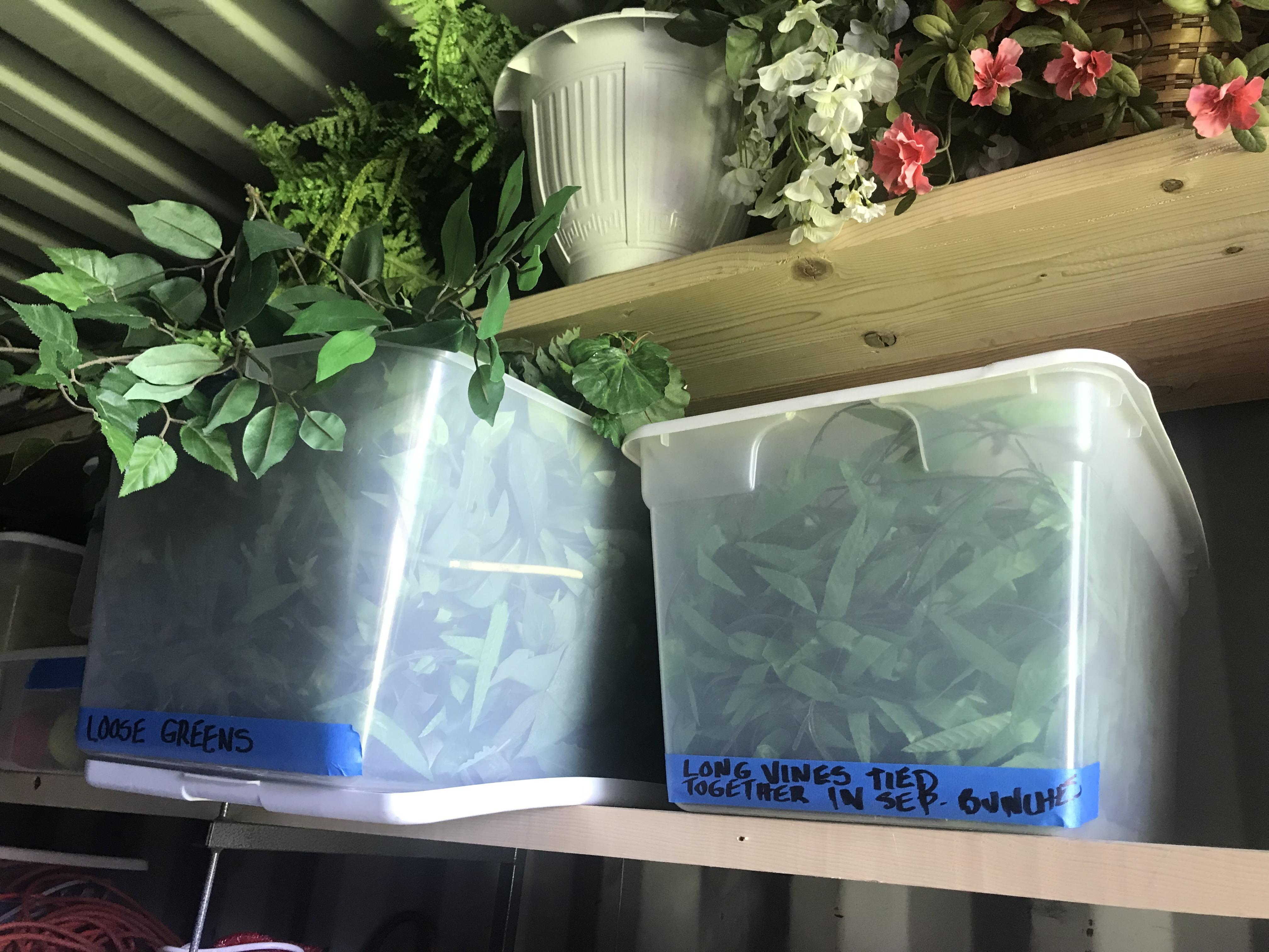 Plants - flowers, Vines
