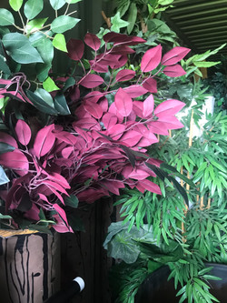Plants, jungle, leave, trees