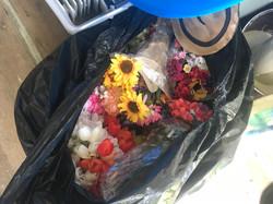 flowers, sunflower, tulips