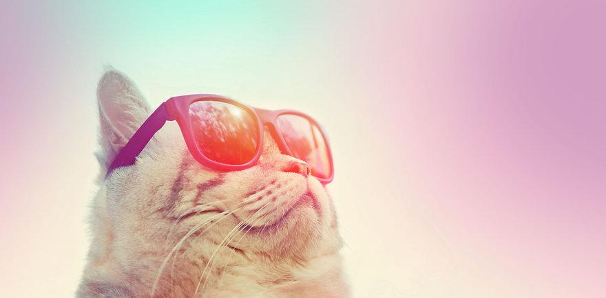 cat-sunnnies-home-main-image.jpg