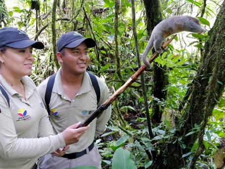 17 especímenes de vida silvestres fueron liberados en la Reserva Ecológica Cofán Bermejo