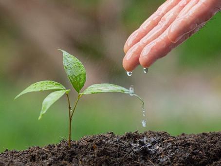 Ecuador lidera el proceso de recuperación verde poscovid -19 en países de América Latina