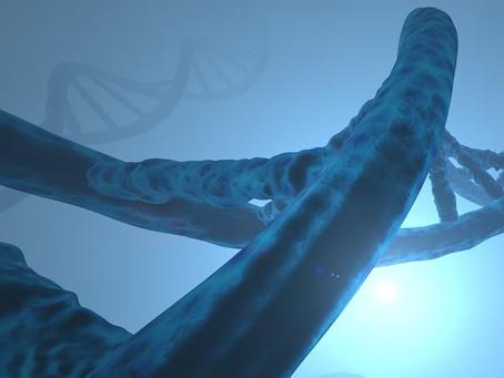 La secuencia completa del cromosoma 8 revela nuevos genes y riesgos de enfermedades