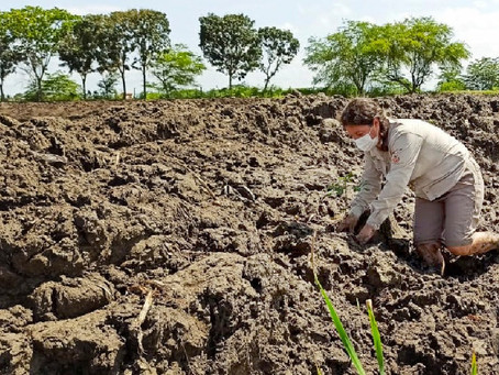 Manabí conmemora el Día Mundial de los Humedales con la siembra de 170 plantas nativas