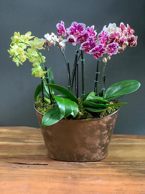 Arranjo  Mix Mini Orquideas - Vaso Oval efeito Oxidado