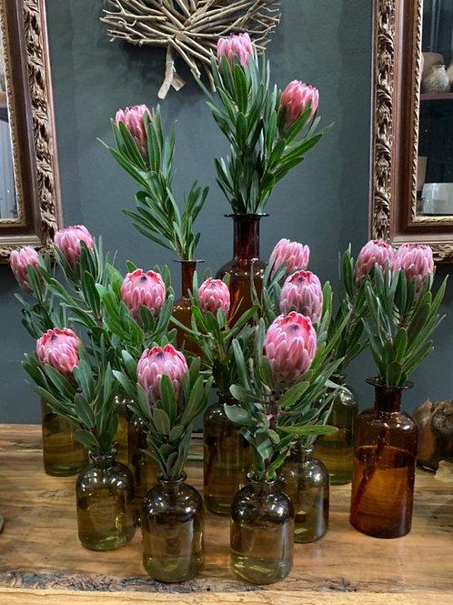 Garrafinha com Proteas G