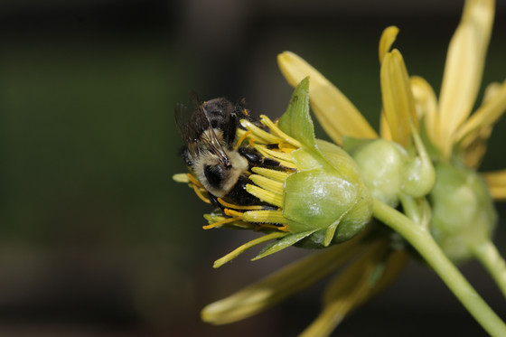 Selecting the right plants to support  bees