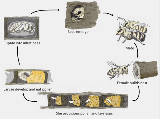 Does size matter for bees?