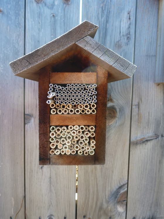 Bee Hotels: a safe haven for Michigan's wild bees
