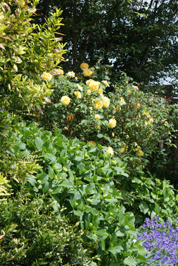 a pretty flower garden