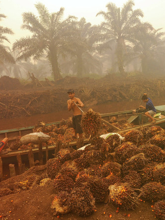 UNTITLED PALM OIL / CHILD SLAVERY PROJECT