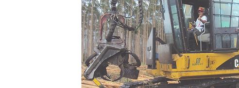 curso-florestal-sp