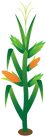 Corn Stalk (3).png