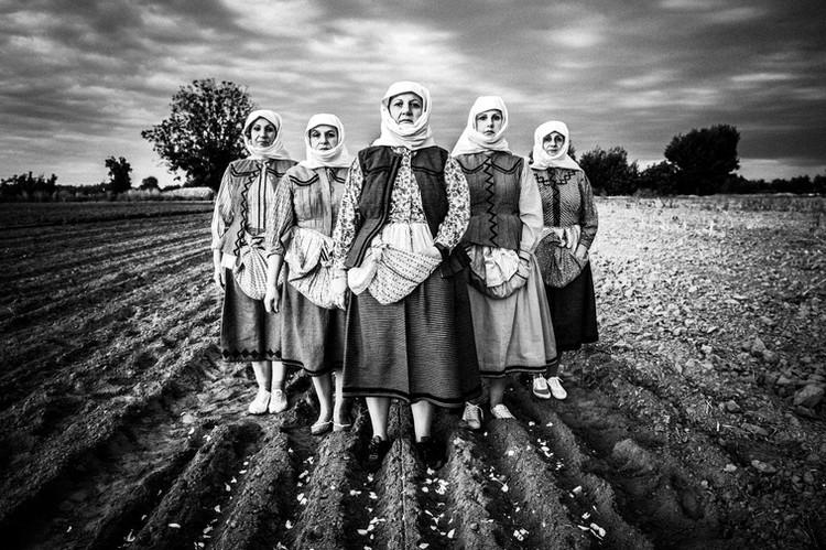 Garlic field, Vyssa, Thrace, Greece