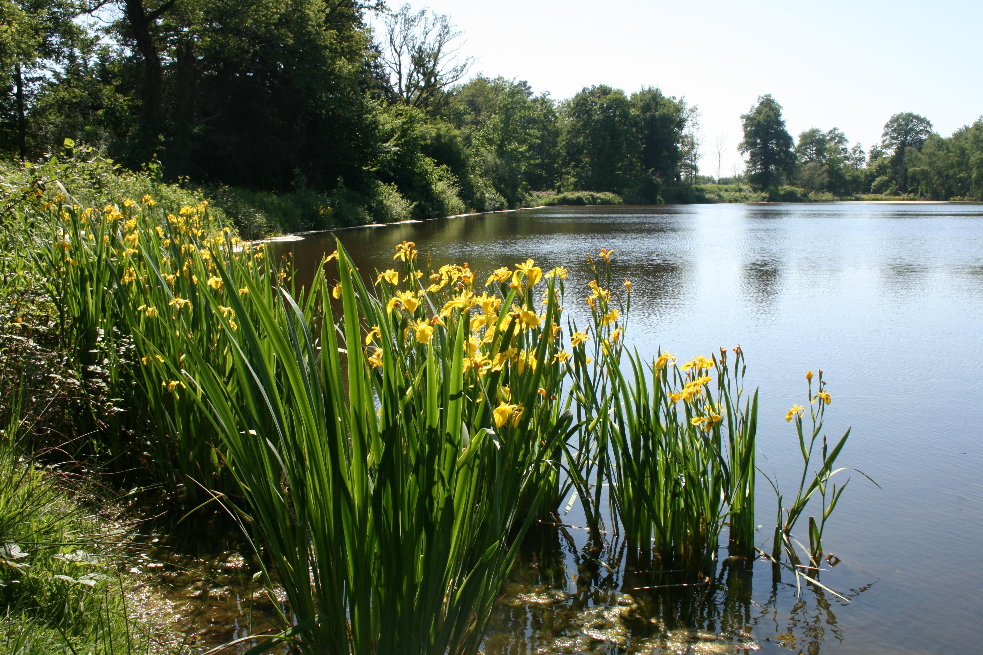 L'étang de Courmain