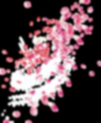 pink-rose-petal-falling-png.png