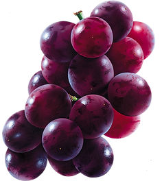 grape_PNG2979.png