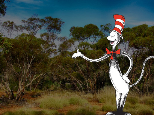 What I Learned From The Cat in the Hat