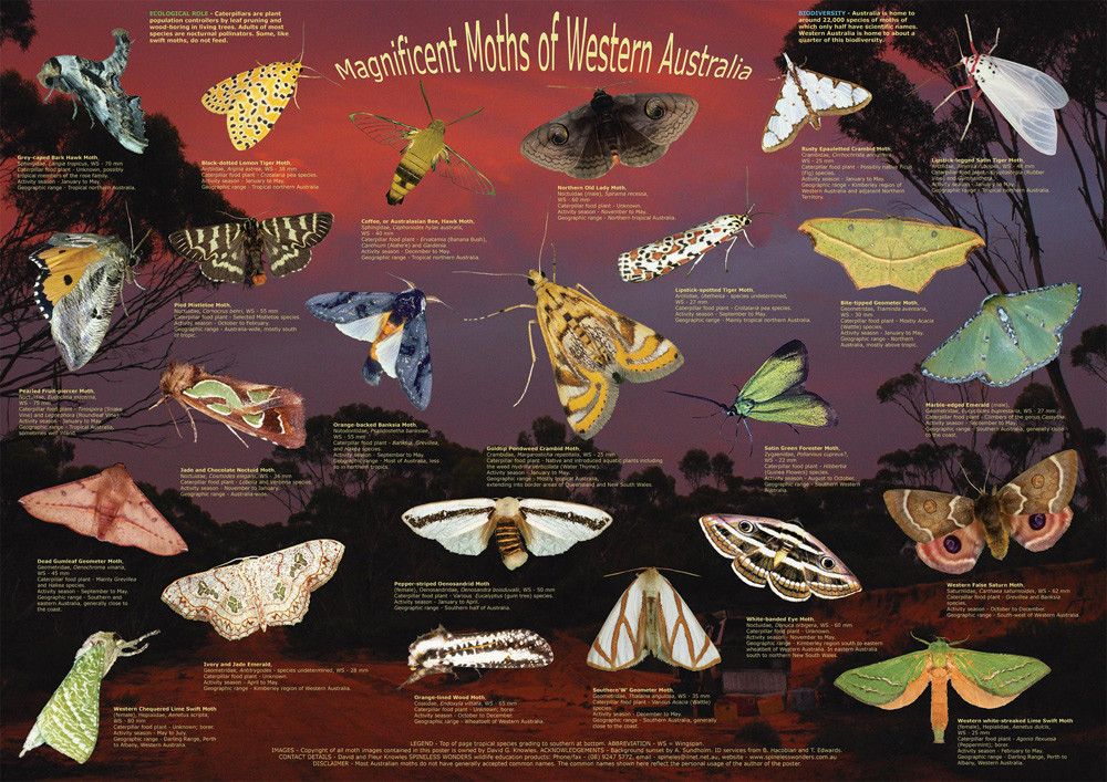 Magnificent Moths of WA