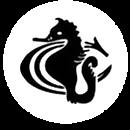seahorses_logo6.png