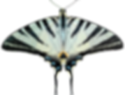 butterfly-1602726_1280.png