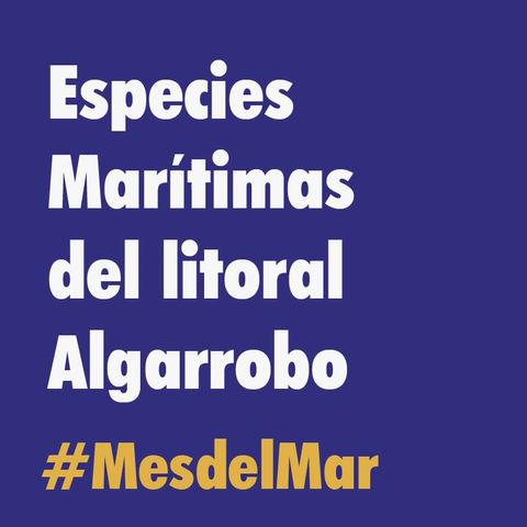 Conoce las especies marítimas del litoral de Algarrobo y Tunquén