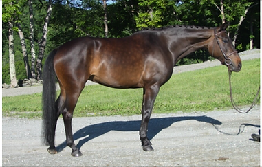 Horse trained by Oronacah Farm Equestrian in Vermont.