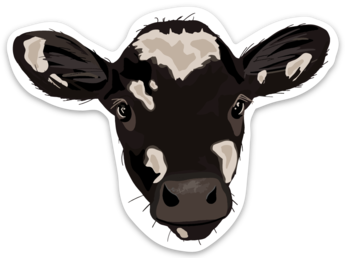 NYFG - Holstein Calf Sticker