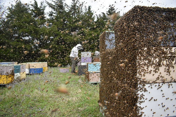 Beekeeper in bee swarm