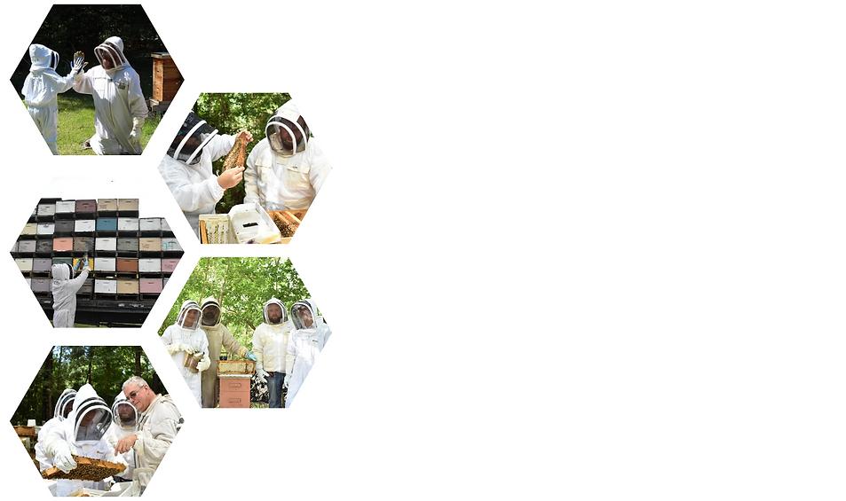 Beekeepers are mentors to veterans