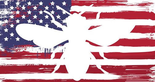 Honey bees helping American veterans