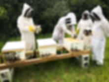 Beekeepers working on honey bee hives.