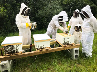Beekeepers working on honey bee hives.