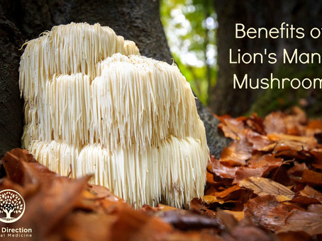 Brain Benefits of Lion's Mane Mushroom