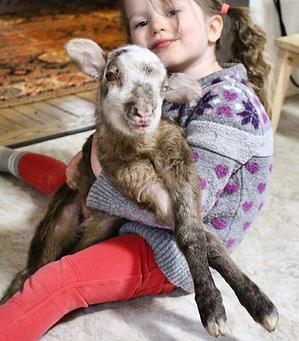 Sunny the Blind Lamb _ Lailo Farm Sanctu