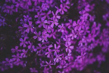 little-purple-flowers-5815.jpg